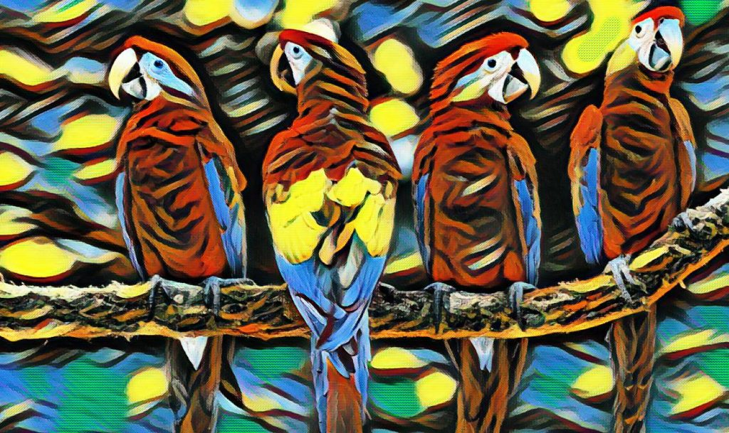 vise cu papagali